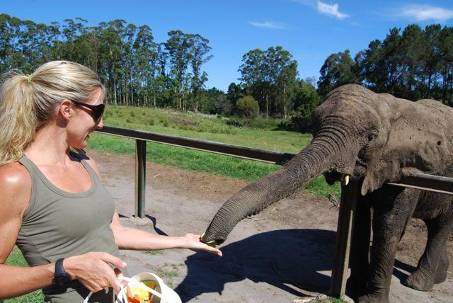 stoltz-honeymoon-iii-knysna-elephant-park
