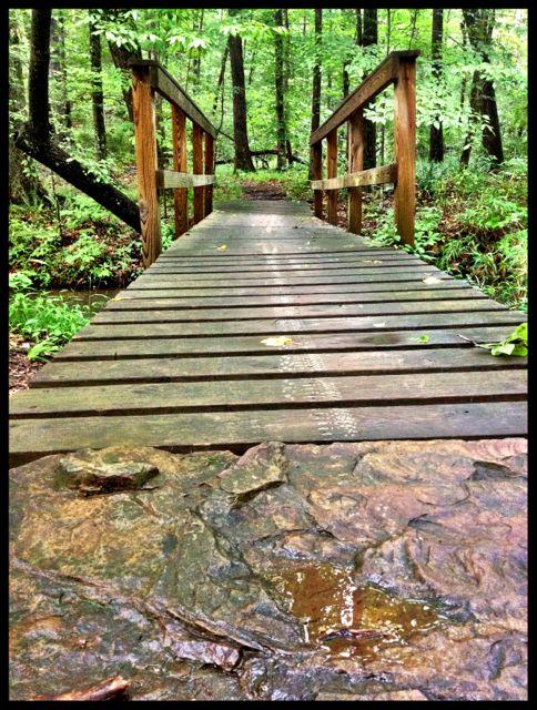 xterra-alabama-bike-oak-mountain-state-park