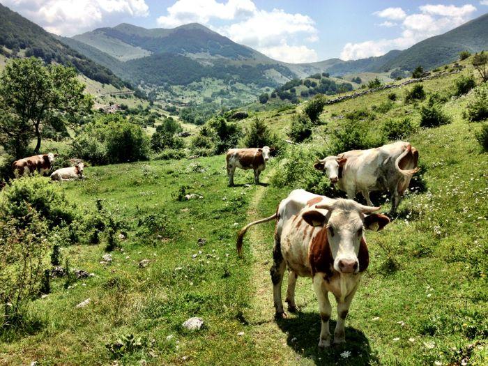 Conrad Stoltz XTERRA Italy Scanno bike course cows