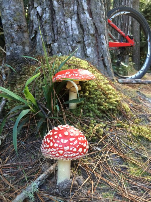 Conrad Stoltz XTERRA New Zealand Rotorua mushrooms
