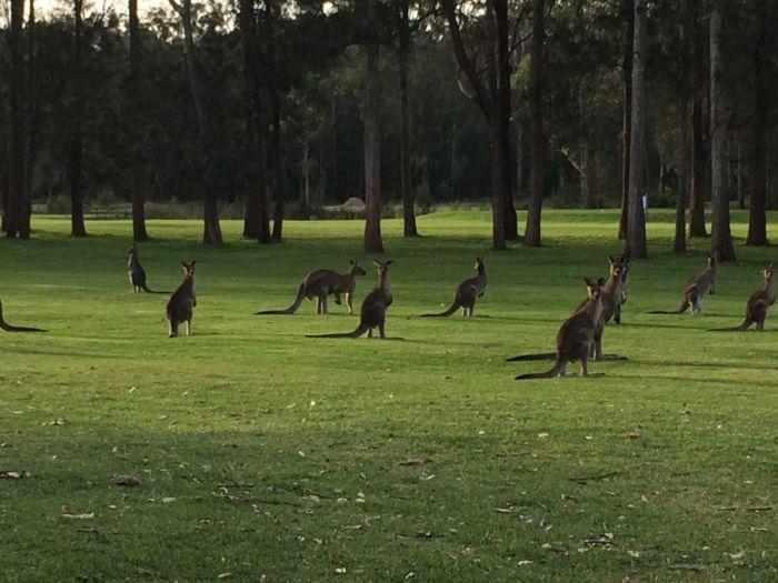 Conrad Stoltz Caveman XTERRA Asia Pacific Champs Australia kangaroos