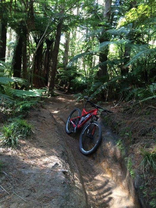 Conrad Stoltz Caveman XTERRA New Zealand Rotorua Specialized Epic single track
